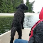 Pointer dog Pepper - pointing the way to shore